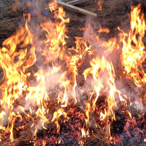 Experimental burn