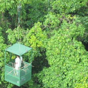 Canopy crane Panama