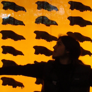 Dire wolf skulls at La Brea Tar Pits