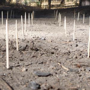Toothpick fieldwork